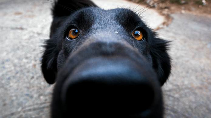 Here's Why Dogs Love to Sniff