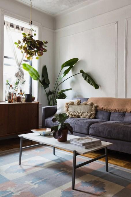 Big, Leafy House Plants: Bird of Paradise