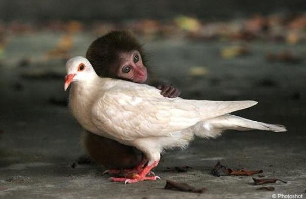 16 Animals that shouldn't be friends,