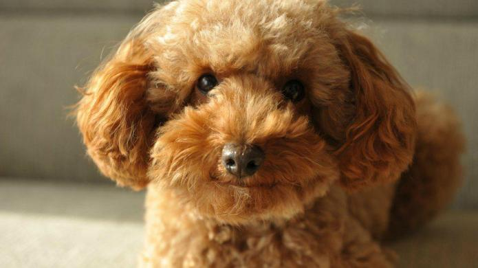 Which small dog breed is right