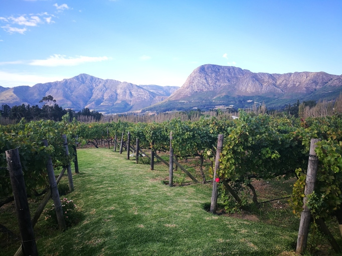 Winelands and safari tour in South Africa