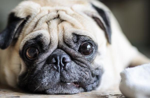 3 Reasons your dog may be