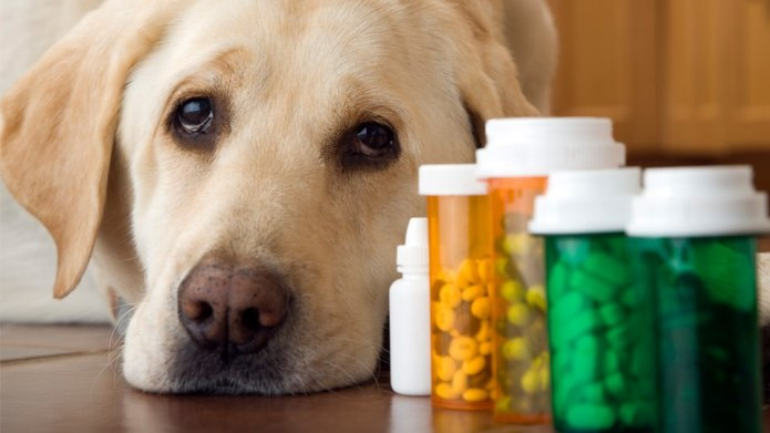 Does My Dog Really Need Supplements?