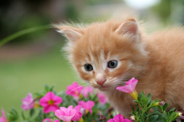 Kitten in flower garden