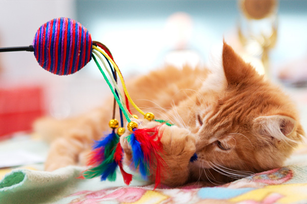 kitten playing with new toy
