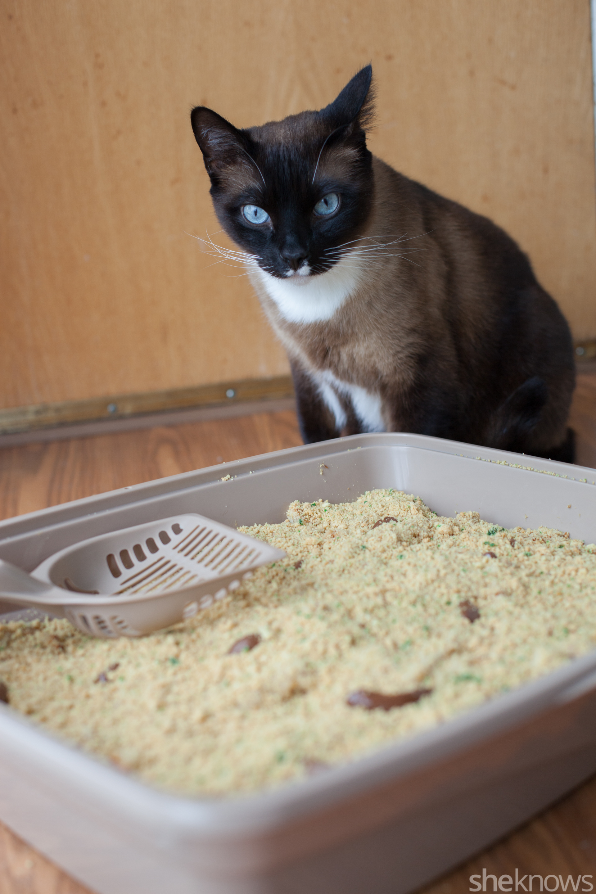 Kitty Litter Cake Is The April Fools Day Prank Your Kids