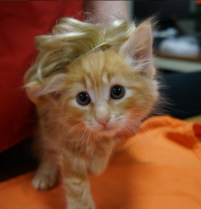 Kitten-Trump