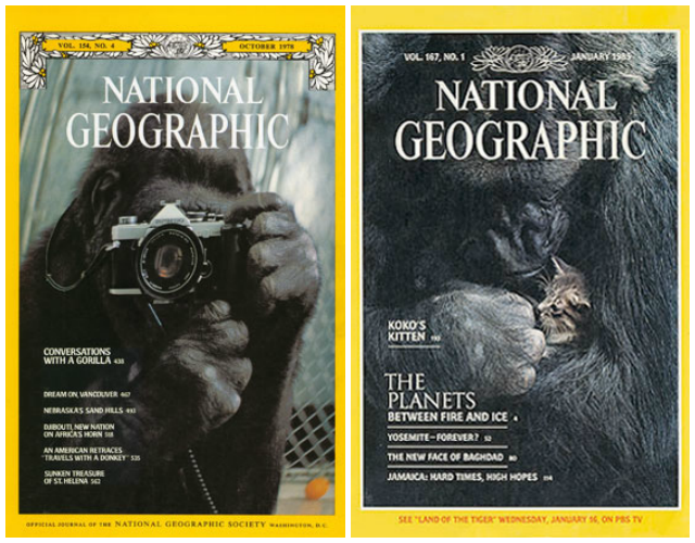 Koko the gorilla on National Georgraphic