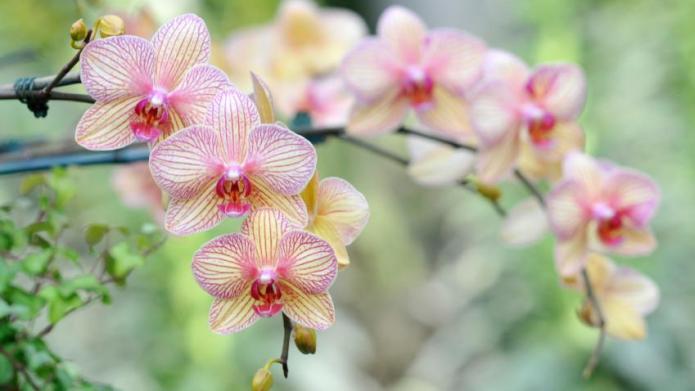 3 Favorite flowering indoor plants