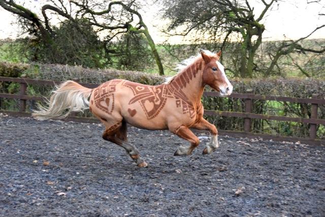 Horse Haircut