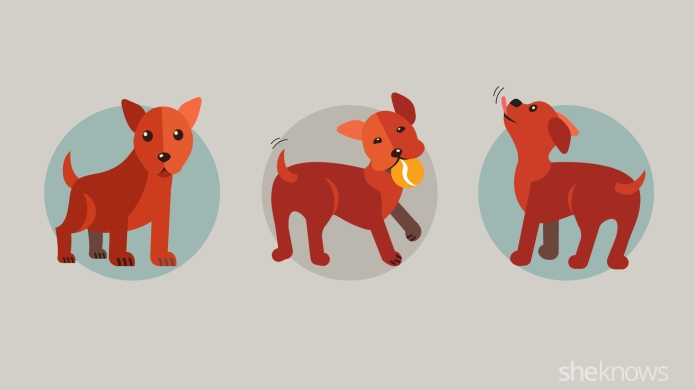 All of your dog's body language