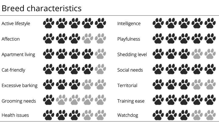 labrador breed characteristics