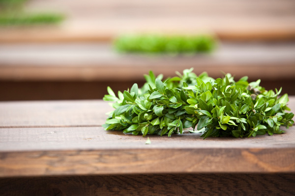 laurel leaves on table