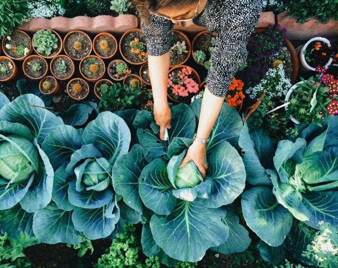 6 Edible garden ideas that are