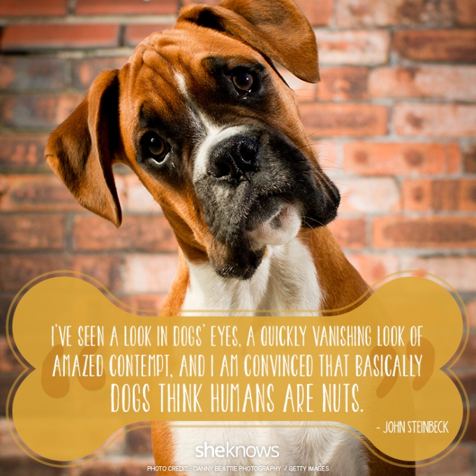 """""""I've seen a long in dogs' eyes, a quickly vanishing look of amazed contempt, and I am convinced that basically dogs think humans are nuts."""" —John Steinbeck"""