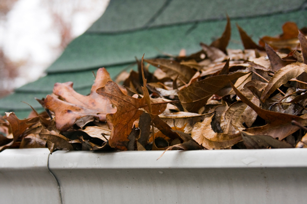 Leaves in gutter
