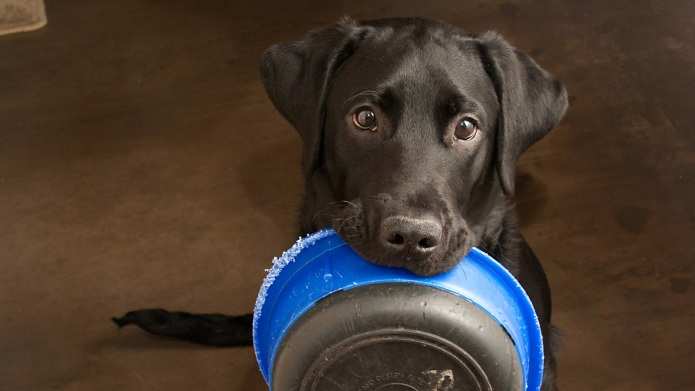 Best grain-free dog foods that your