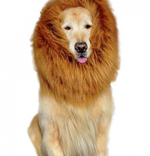 wild goldens lion costume for large dogs