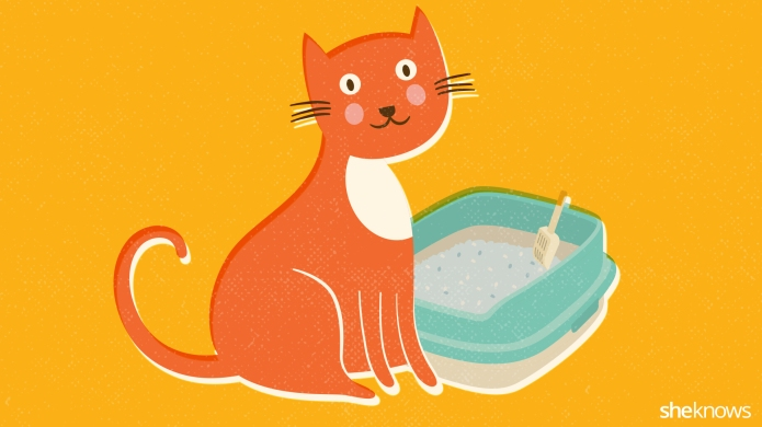 The perfect litter box cleaning routine
