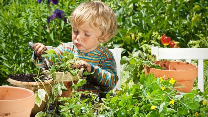 Garden Plants for Kids