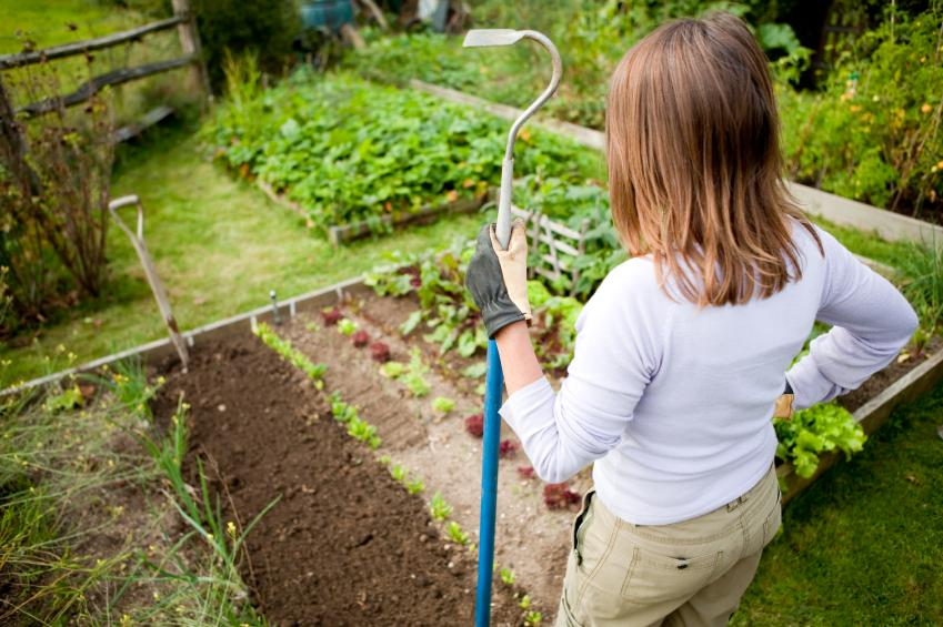 """What's a """"Green Thumb""""? – SheKnows"""
