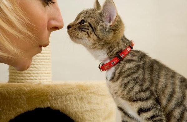 How to handle pet allergies