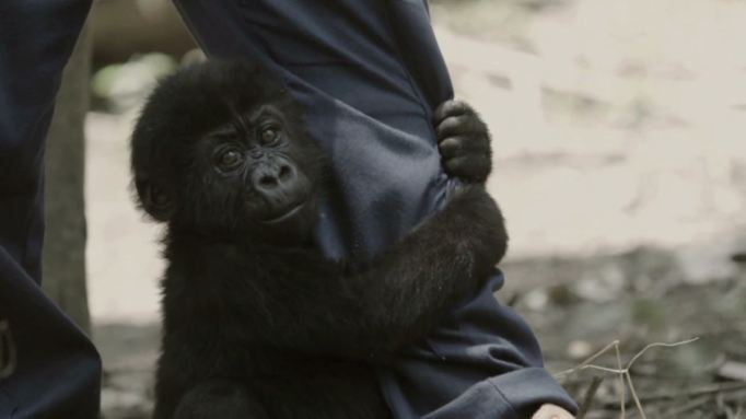 15 Movies About Animals That Always Make Us Cry: Virunga