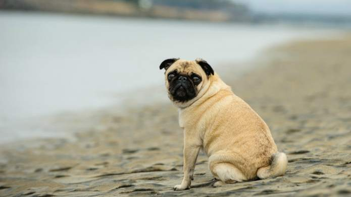 6 Dog Breeds That Don't Do