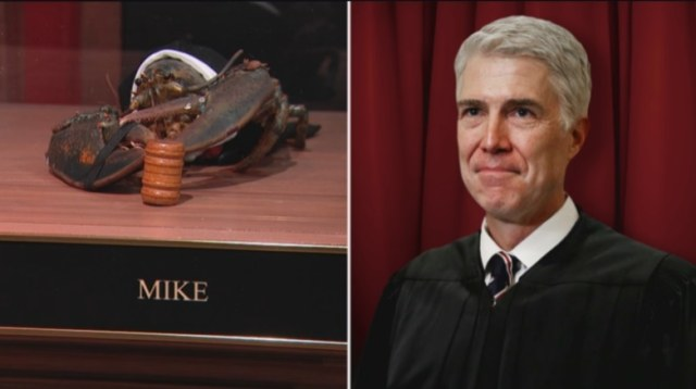 Mike the Lobster Supreme Court Justice