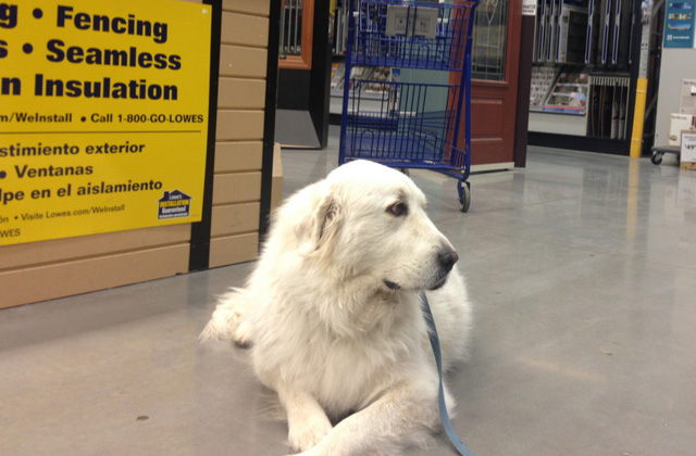dog in lowe's