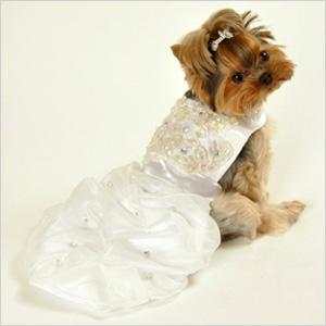 Top 5 wedding outfits for pets