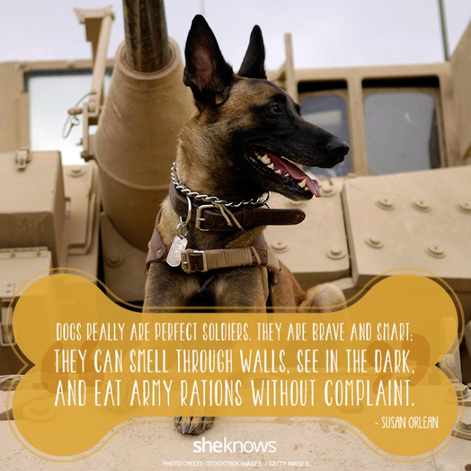 """""""Dogs really are perfect soldiers. They are brave and smart; they can smell through walls, see in the dark, and eat Army rations without complaint. —Susan Orlean"""