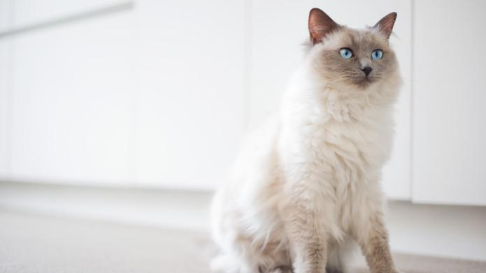 10 Cat Breeds That Have the