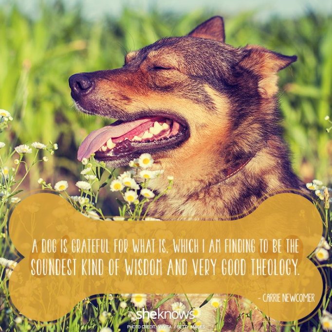 """""""A dog is grateful for what is, which I am finding to be the soundest kind of wisdom and very good theology."""" —Carrie Newcomer"""