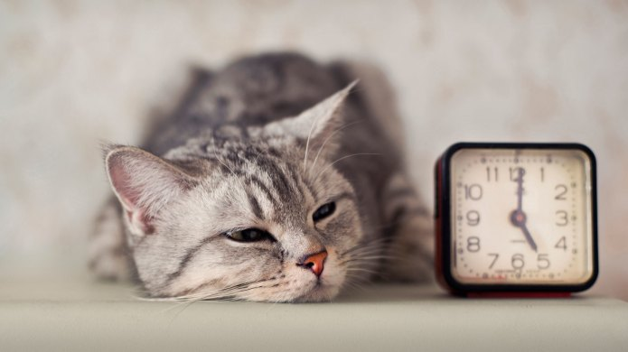 Pets give life advice: Punctuality