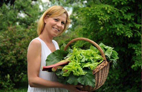 Grow lettuce in your cool-season garden