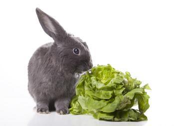 Vegan Easter Veggie Salad
