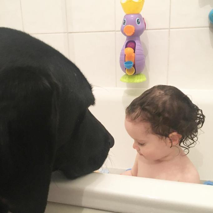 Dog watching baby in tub