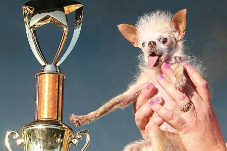 World's Ugliest Dog has just been