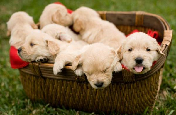 Problems common to purebred dogs