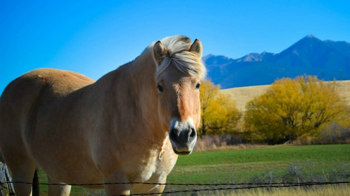 Dating a horse changed my love