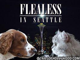Flealess in Seattle