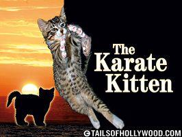The Karate Kitten