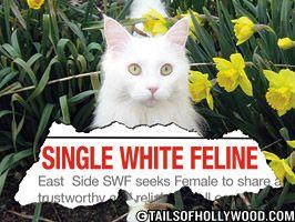 Single White Feline