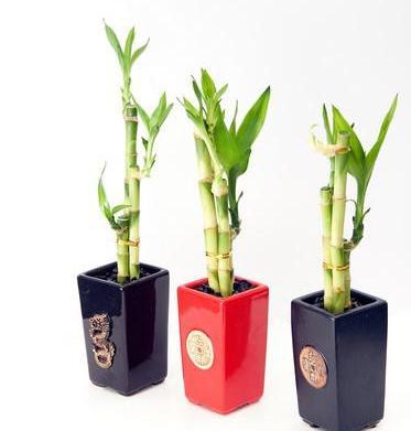 10 Plants that just won't die