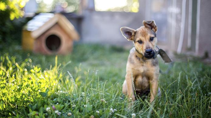 Why your neighbors hate your pet