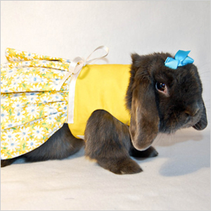 yellow daisy rabbit dress
