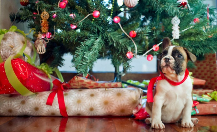 These Gifts for Dog Lovers Are