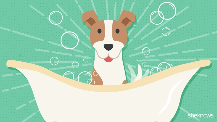 Dog grooming 101: A timeline of