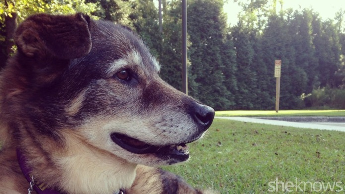 Losing my dog taught me to